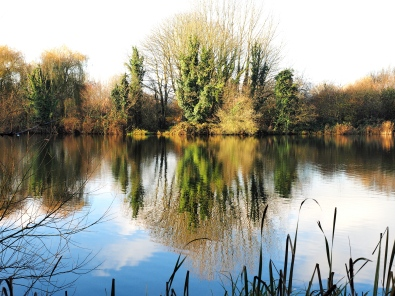 Reflections: Springwell lake