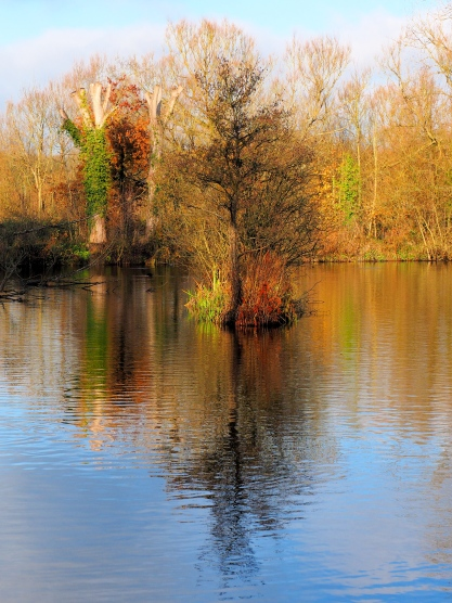 Reflections: Stocker's Lake